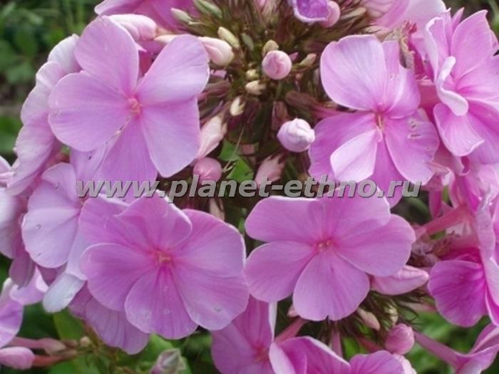 flowers_39