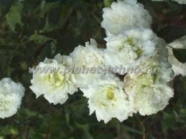 flowers_26