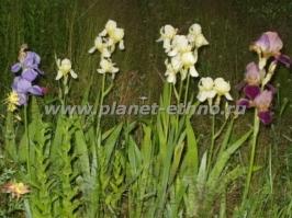flowers_32