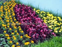 озеленение города – цветник у входа в магазин
