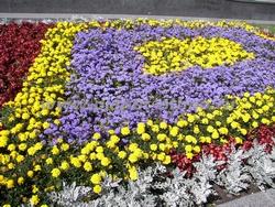 устройство цветников – геометрическая клумба из летников в городской зоне отдыха