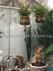 фитодизайн квартиры – озеленение интерьера с использованием подвесных кашпо