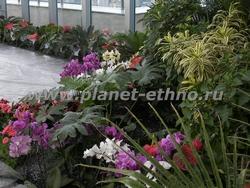 озеленение гостиниц – композиция с цветущими антуриумами и фаленопсисами