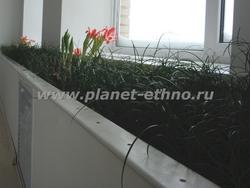 фитодизайн дома – комнатный «газон»