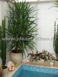 фитодизайн дома – озеленение пространства вокруг домашнего бассейна