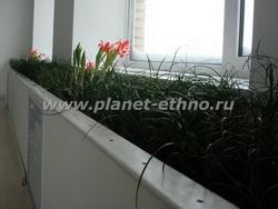 цветочное оформление помещений – комнатный «газон» является оригинальным средством озеленения офисов