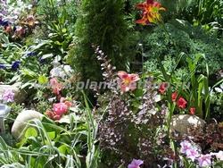 ландшафтные работы - цветочно-кустарниковая композиция