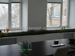 растения для офиса - комнатный газон