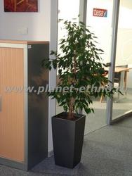 оформление офиса цветами - одиночное растение в кашпо геометрической формы