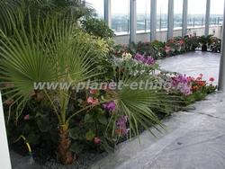 фитодизайн офиса с использованием пальм