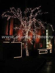 декоративная подсветка деревьев - ночная съемка объекта