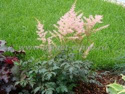 озеленение газонов - посадка газона семенами