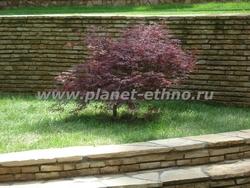 садовый бонсай из клена дланевидного
