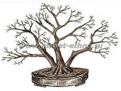 контейнерный японский бонсай из деревьев лиственных пород – ручная графика