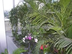 сервисный уход за комнатными растениями