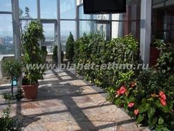 озеленение зимних садов с использованием антуриумов и цитрусовых